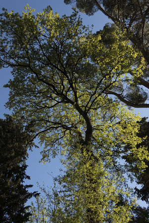 green foliage tree low angle view