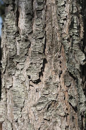 tree bark close up Stock fotó