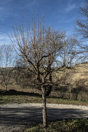 small tree Stock fotó