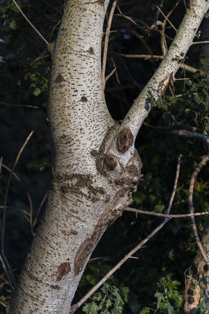 nut tree detail Stock fotó