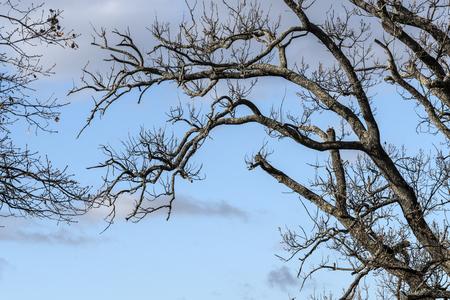 Tree branches Stock fotó
