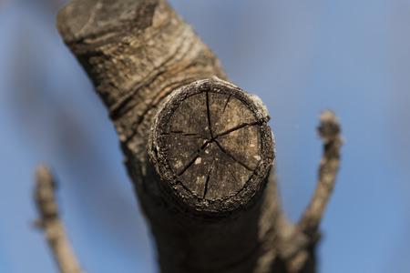 branch cut detail macro