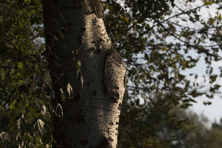 tree trunk close up Stock fotó