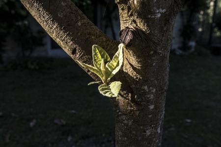 tree branch close up