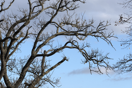 tree branches in the sky detail