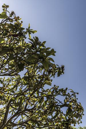 tree leaves in the sky Stock fotó