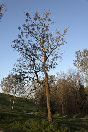 young tree in the countryside