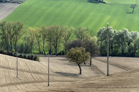 tree on the fields