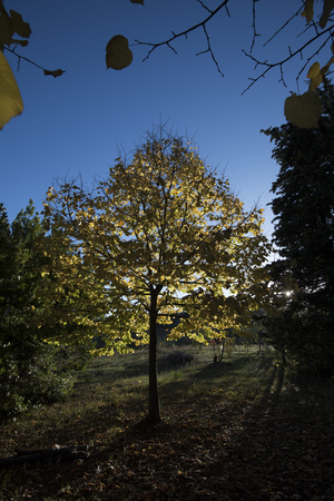 yellow tree leaves