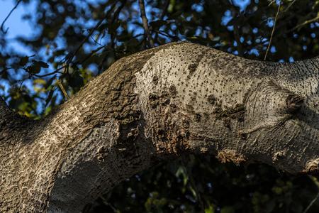 nut tree branch detail Stock fotó
