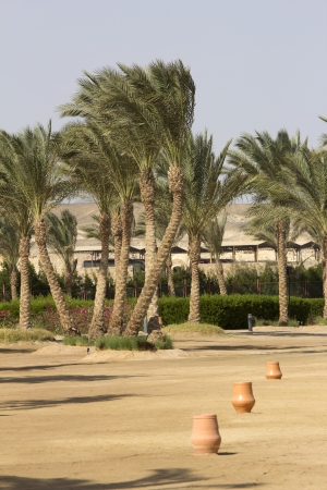 marsa: palm trees on a beach in marsa alam in egypt