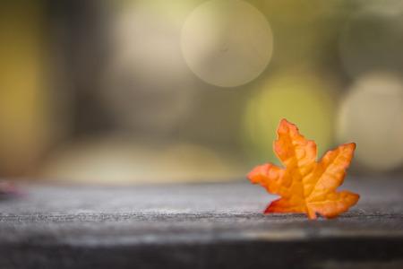 auszeit: buntes Herbstlaub auf Holz mit farbigem Hintergrund