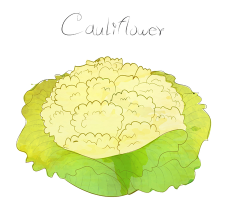 water color: Cauliflower water color art