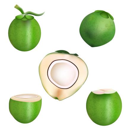 de coco y el diseño de la rebanada de coco mango