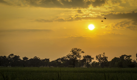 Evening in the rice field Thailand