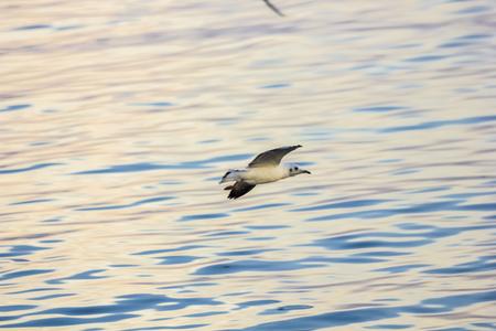 Evening Bird over wild sea