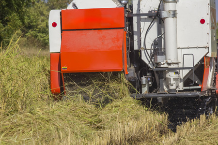 Thailand Combine harvesters working rice field back view