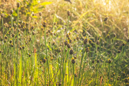 Evening grass background