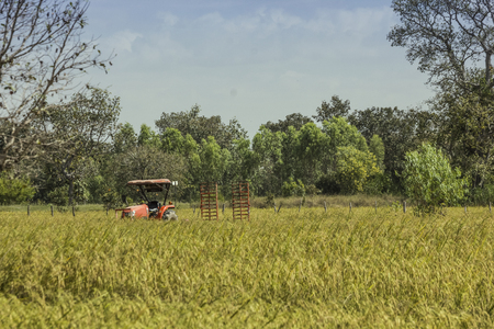 The truck tailer in rice field