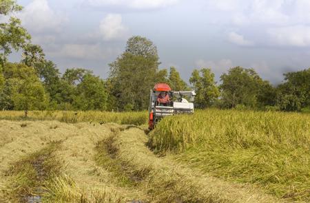 Thailandia Mietitrebbie lavorando campo di riso Archivio Fotografico - 90102612