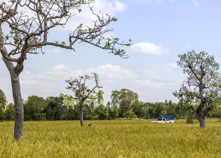 The pickup in rice field