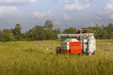 Thailand Combine harvesters working rice field