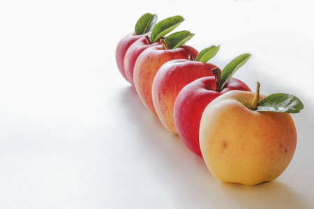 Apples short by color on white background