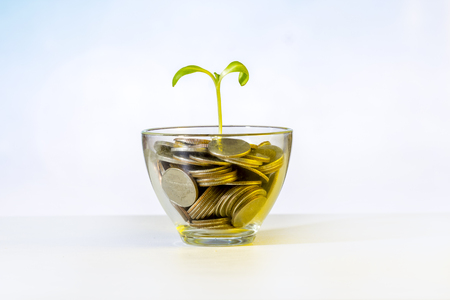 Coin in grass and tree investment concept