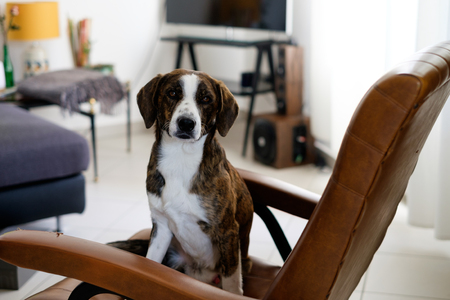messing: Lovely dog left alone ready for messing up home