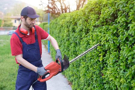 paysagiste: Gardien professionnel vêtu de salopettes de sécurité à l'aide d'un coupe-haie Banque d'images