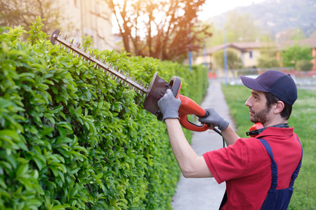 Professional gardner dressed with safety overalls using an hedge clipper