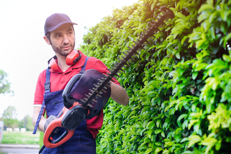 Professional gardener dressed with safety overalls using an hedge clipper