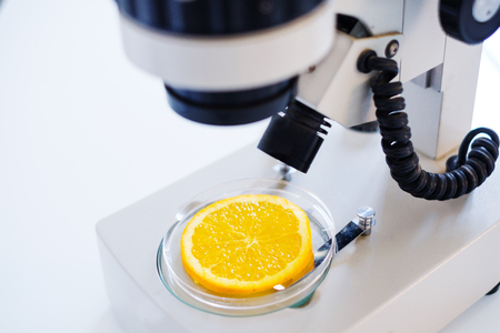 Researcher studying sample of ogm fruit in modern laboratory Banque d'images