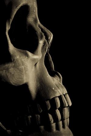 black skull photo