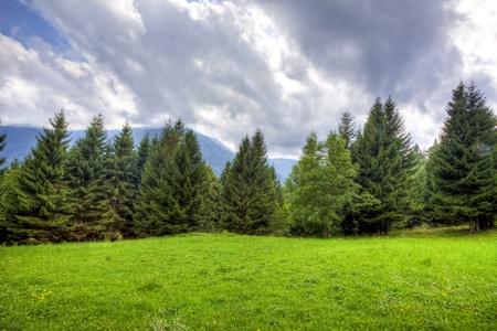 brushwood: brushwood in the mountain Stock Photo