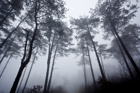 mystrious foggy forest in winter Stock Photo - 9841481