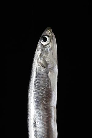 vertical sardine on black background photo