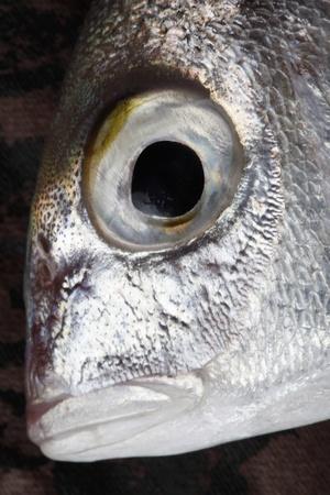 fish close up photo