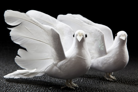 two doves on black background Stock Photo - 9985154