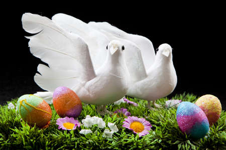 pigeon egg: two doves on colorful field with easter eggs Stock Photo