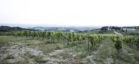 vineyard in tuscany photo
