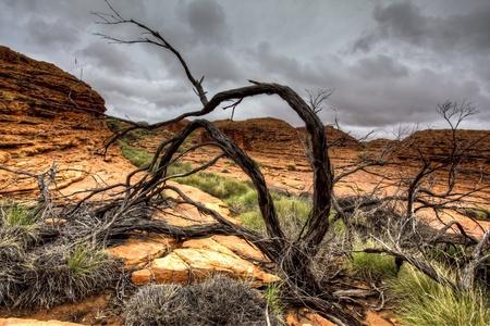 australian landscape: australian outback