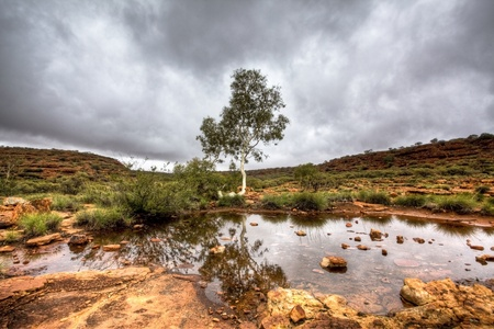 red bush: australian outback