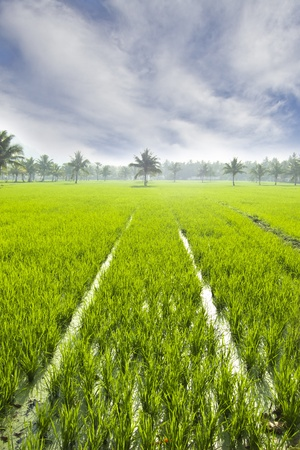 agriculture india: ricefield in hampi, india Stock Photo