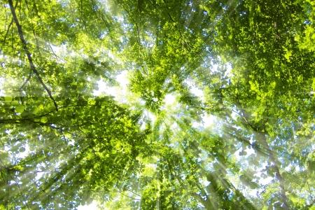 arbol de la vida: hojas verdes de fondo en día soleado Foto de archivo