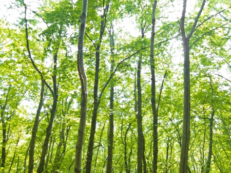 forest trees background. nature green wood sunlight. photo