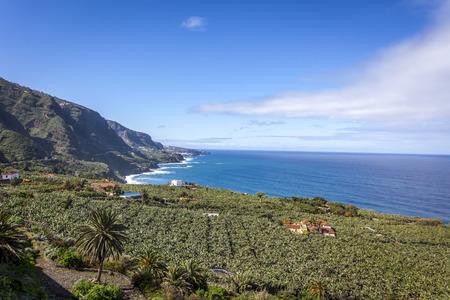 テネリフェ島のカナリア諸島、スペインの海岸風景とバナナのプランテーション