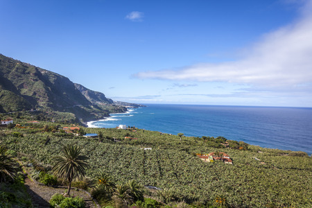Coast landscape and banana plantation in Tenerife, Canary Islands, Spain