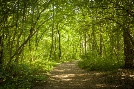 Path in beautiful green forest in summer Stockfoto