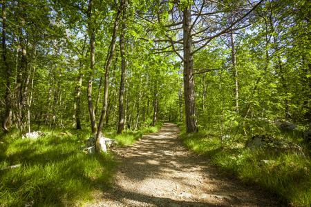 Chemin dans belle forêt verte en été